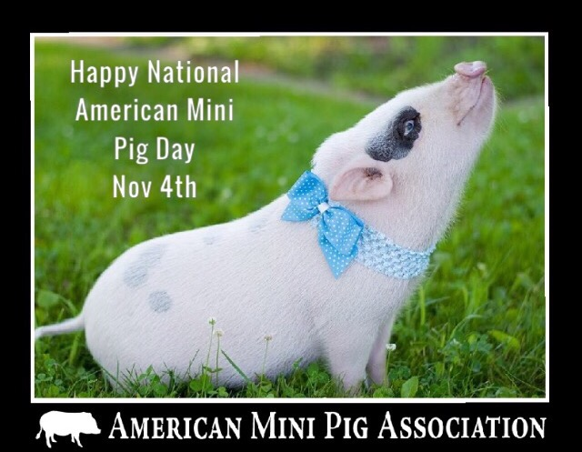 Happy National American Mini Pig Day